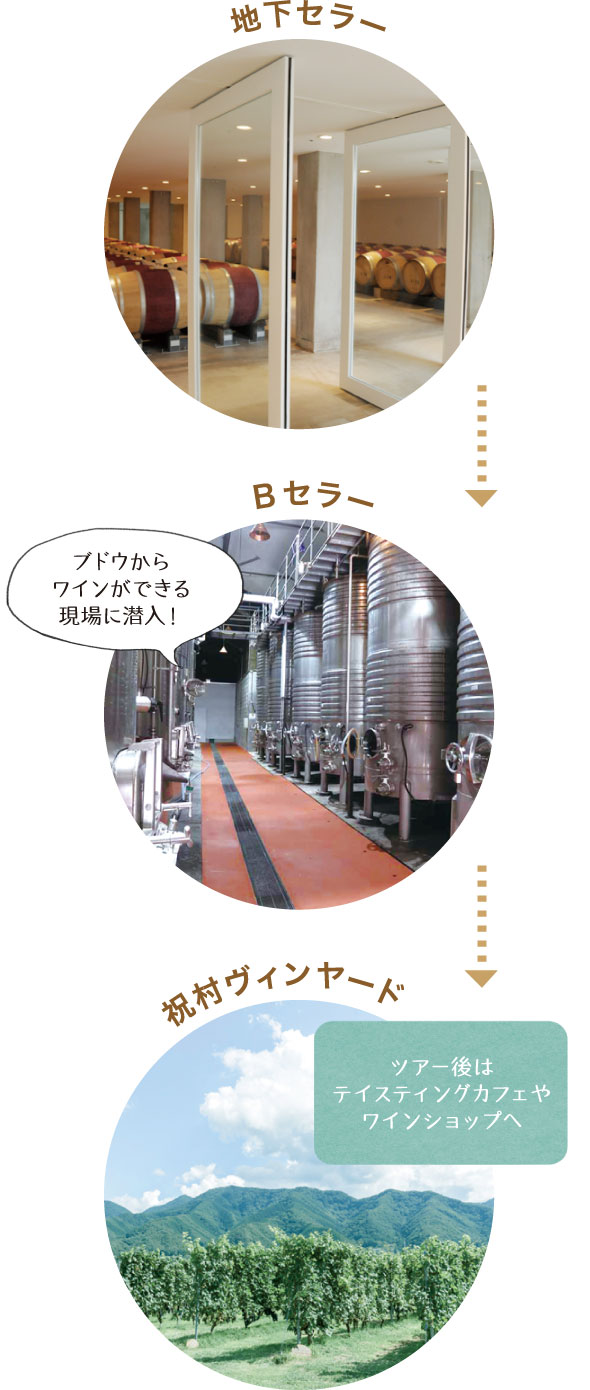 地下セラー > Bセラー「ブドウからワインができる現場に潜入!」 > 祝村ヴィンヤード「ツアー後はテイスティングカフェやワインショップへ」